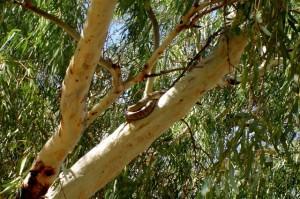 Alice Springs - Alice Springs
